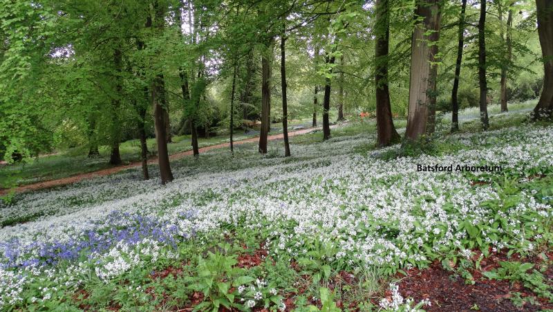 batsford-arboretum-13