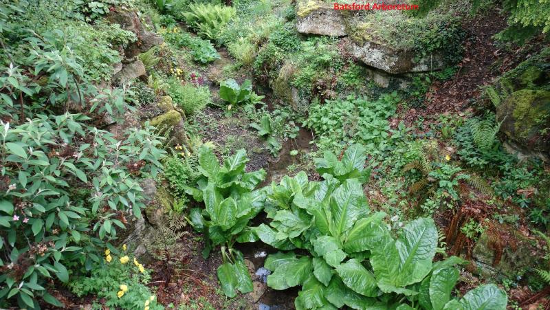 batsford-arboretum-5