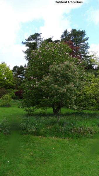 batsford-arboretum-9