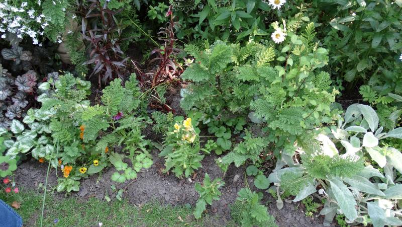co-durham-helmingham-gardens-047