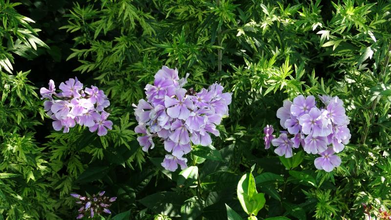 co-durham-helmingham-gardens-048
