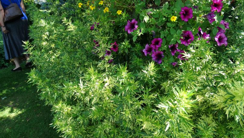 co-durham-helmingham-gardens-049