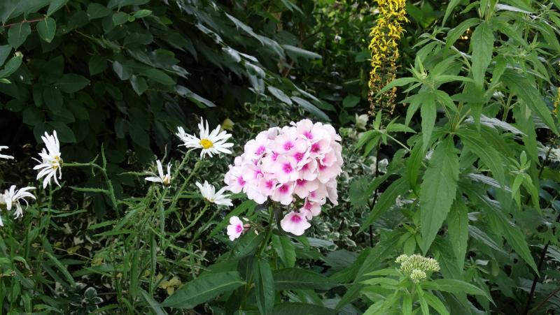 co-durham-helmingham-gardens-050