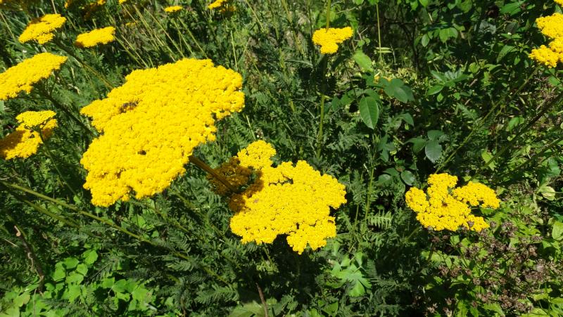 co-durham-helmingham-gardens-065