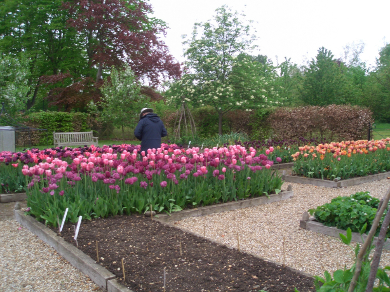 ulting-wick-april-2014-plant-sale-may-2014-009