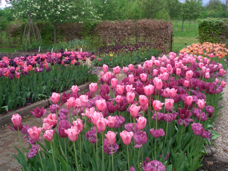 ulting-wick-april-2014-plant-sale-may-2014-014